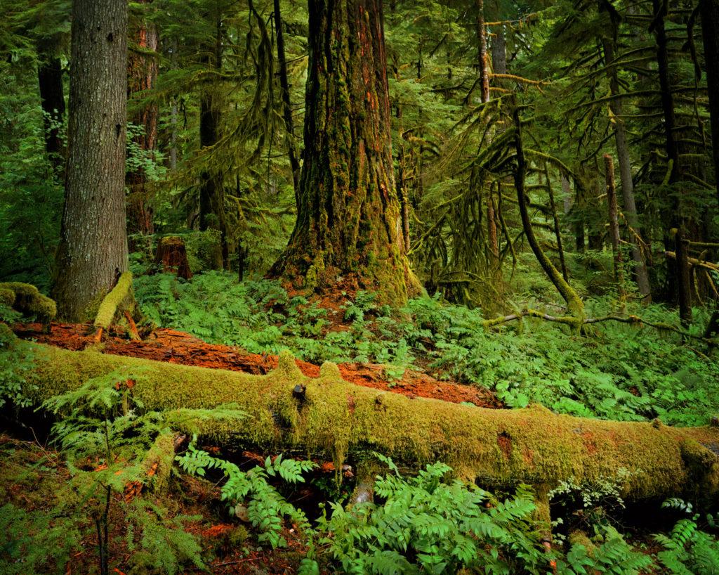 Jeffrey Luers, 'Happy', Fall Creek, OR